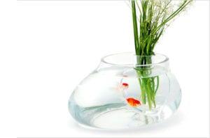 akvarium-vaza